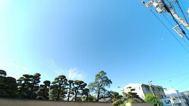 朝の青空.jpg